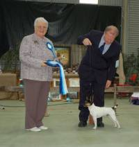Jane Judging the 1st National Tenterfield Terrier Show