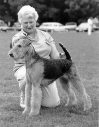 Jane handling an Airedale