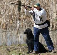 Flat Coat Recreational Shooting