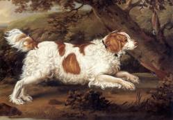 Spaniel (Early Welsh) 1797