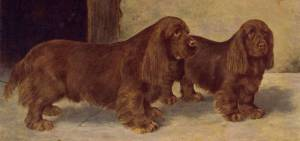 Sussex Spaniels 1904
