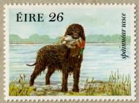 Irish Water Spaniel Stamp