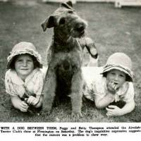 Airedales c 1930's