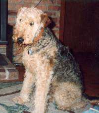 Warren's first Airedale