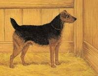 Airedale 1891