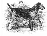 Airedale 1898