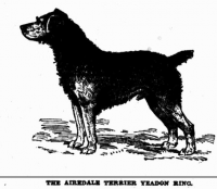 Airedale Yeardon Ring