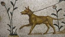 Ancient Greek Companion Dog 320-350AD