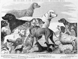 Melbourne's First Dog Show 1864