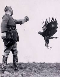 Falconry (catching small birds using a bird of prey)