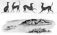 Old Coursing Hounds