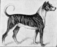 German Boarhound 1859