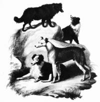 British Herding Dogs c 1800