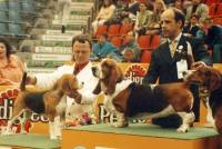 Beagle and Basset Hound