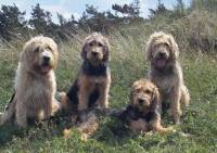 Otterhound Family Group