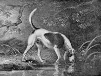 Southern Hound c 1803