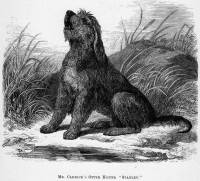 Otterhound c 1886