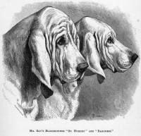 Bloodhounds c 1886