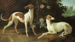 Whippets 1725