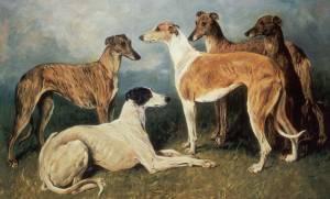Greyhound » JaneDogs
