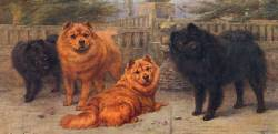 Chow Chows c 1907