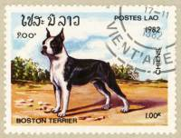 Boston Terrier Stamp