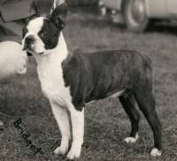 French Bulldog And Boston Terrier Janedogs