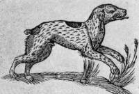Spotted Dog 1637