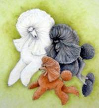 Different Colours and Sizes of Poodles