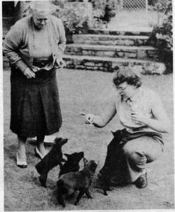 Lady Coles with her Schipperkes