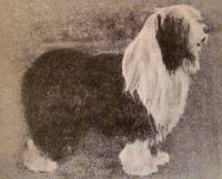 Old English Sheepdog, Australia 1912