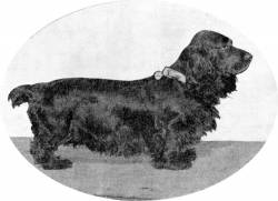 Grand Champion Field Spaniel (Australia) born 1905