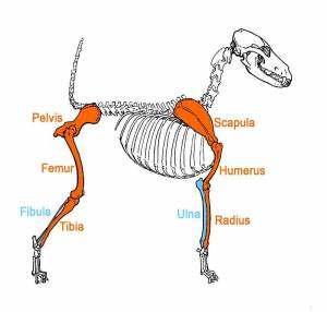 Dog Anatomy Terminology » JaneDogs