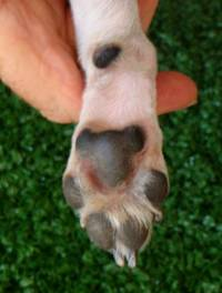 Round Dog's (Cat) foot