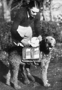 Dog Carrying irst Aid