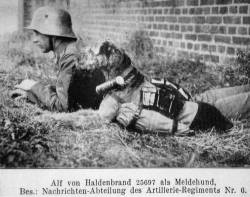 German War Dog
