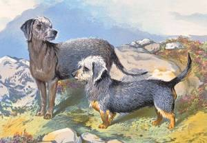 Bedlington and Dandie Dinmont c 1890