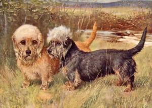 Mustard and Pepper Dandie Dinmonts c 1900