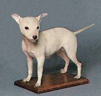 Toy Bull Terrier (under 12 lbs)