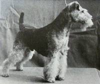 Welsh Terrier 1966