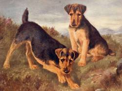Welsh Terriers c 1904