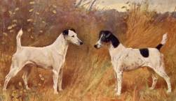 Fox Terriers (Smooth) c 1910