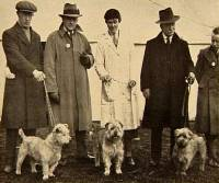 Glen of Imaal Terriers c 1935