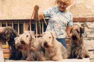 Family of Cesky Terriers