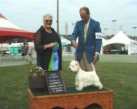 Jane Judging West Highland White Terrier