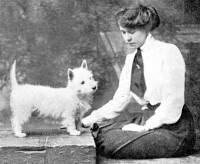 West Highland White Terrier c 1910