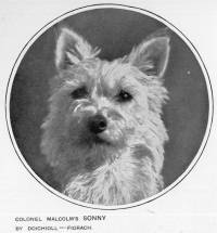 One of Colonel Poltolloch's Westies