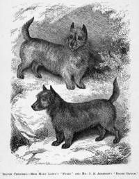 Scotch Terriers 1876