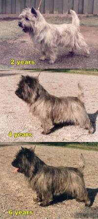 Same Cairn at Different Ages