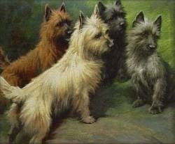 Cairn Terriers Demonstrating the Colour Variation